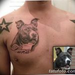 фото тату питбультерьер от 25.10.2017 №043 - tattoo pit bull terrier - tatufoto.com