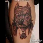 фото тату питбультерьер от 25.10.2017 №055 - tattoo pit bull terrier - tatufoto.com
