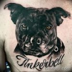 фото тату питбультерьер от 25.10.2017 №056 - tattoo pit bull terrier - tatufoto.com