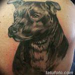 фото тату питбультерьер от 25.10.2017 №057 - tattoo pit bull terrier - tatufoto.com