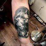 фото тату питбультерьер от 25.10.2017 №058 - tattoo pit bull terrier - tatufoto.com