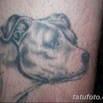 фото тату питбультерьер от 25.10.2017 №059 - tattoo pit bull terrier - tatufoto.com