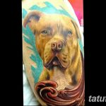 фото тату питбультерьер от 25.10.2017 №064 - tattoo pit bull terrier - tatufoto.com