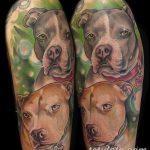 фото тату питбультерьер от 25.10.2017 №066 - tattoo pit bull terrier - tatufoto.com