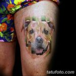 фото тату питбультерьер от 25.10.2017 №068 - tattoo pit bull terrier - tatufoto.com