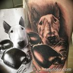 фото тату питбультерьер от 25.10.2017 №070 - tattoo pit bull terrier - tatufoto.com