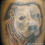 фото тату питбультерьер от 25.10.2017 №071 - tattoo pit bull terrier - tatufoto.com