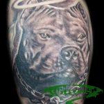 фото тату питбультерьер от 25.10.2017 №076 - tattoo pit bull terrier - tatufoto.com