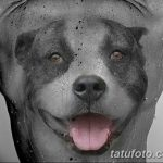 фото тату питбультерьер от 25.10.2017 №079 - tattoo pit bull terrier - tatufoto.com