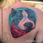 фото тату питбультерьер от 25.10.2017 №080 - tattoo pit bull terrier - tatufoto.com