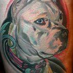 фото тату питбультерьер от 25.10.2017 №081 - tattoo pit bull terrier - tatufoto.com