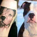 фото тату питбультерьер от 25.10.2017 №082 - tattoo pit bull terrier - tatufoto.com
