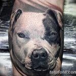 фото тату питбультерьер от 25.10.2017 №084 - tattoo pit bull terrier - tatufoto.com
