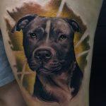 фото тату питбультерьер от 25.10.2017 №089 - tattoo pit bull terrier - tatufoto.com
