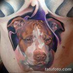 фото тату питбультерьер от 25.10.2017 №090 - tattoo pit bull terrier - tatufoto.com