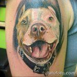 фото тату питбультерьер от 25.10.2017 №094 - tattoo pit bull terrier - tatufoto.com