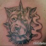 фото тату питбультерьер от 25.10.2017 №096 - tattoo pit bull terrier - tatufoto.com
