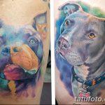 фото тату питбультерьер от 25.10.2017 №099 - tattoo pit bull terrier - tatufoto.com