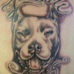 фото тату питбультерьер от 25.10.2017 №100 - tattoo pit bull terrier - tatufoto.com