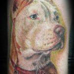 фото тату питбультерьер от 25.10.2017 №102 - tattoo pit bull terrier - tatufoto.com