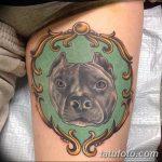 фото тату питбультерьер от 25.10.2017 №110 - tattoo pit bull terrier - tatufoto.com
