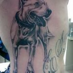 фото тату питбультерьер от 25.10.2017 №112 - tattoo pit bull terrier - tatufoto.com