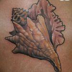 фото тату раковина от 07.10.2017 №004 - tattoo shell - tatufoto.com
