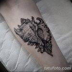 фото тату раковина от 07.10.2017 №015 - tattoo shell - tatufoto.com