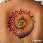 фото тату раковина от 07.10.2017 №024 - tattoo shell - tatufoto.com