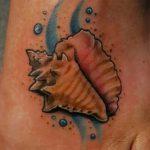 фото тату раковина от 07.10.2017 №073 - tattoo shell - tatufoto.com