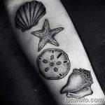 фото тату раковина от 07.10.2017 №125 - tattoo shell - tatufoto.com