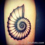 фото тату раковина от 07.10.2017 №147 - tattoo shell - tatufoto.com