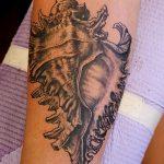 фото тату раковина от 07.10.2017 №162 - tattoo shell - tatufoto.com