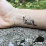 фото тату раковина от 07.10.2017 №176 - tattoo shell - tatufoto.com