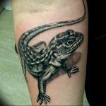 фото тату саламандра от 07.10.2017 №088 - tattoo salamander - tatufoto.com