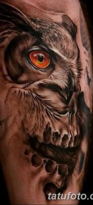 фото тату сова с черепом от 23.10.2017 №011 — tattoo owl with a skull — tatufoto.com