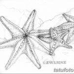 фото Эскизы тату морская звезда от 31.10.2017 №005 - Sketches of a starfish tattoo