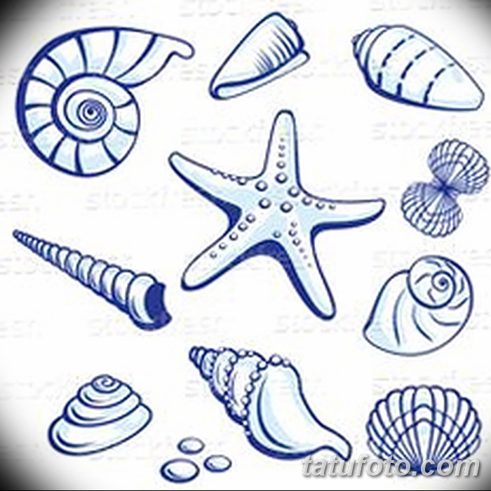 фото Эскизы тату морская звезда от 31.10.2017 №022 - Sketches of a starfish tattoo