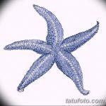 фото Эскизы тату морская звезда от 31.10.2017 №024 - Sketches of a starfish tattoo