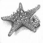 фото Эскизы тату морская звезда от 31.10.2017 №051 - Sketches of a starfish tattoo