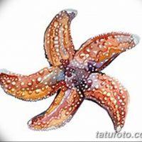 Эскизы тату морская звезда