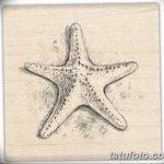 фото Эскизы тату морская звезда от 31.10.2017 №058 - Sketches of a starfish tattoo