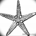 фото Эскизы тату морская звезда от 31.10.2017 №066 - Sketches of a starfish tattoo