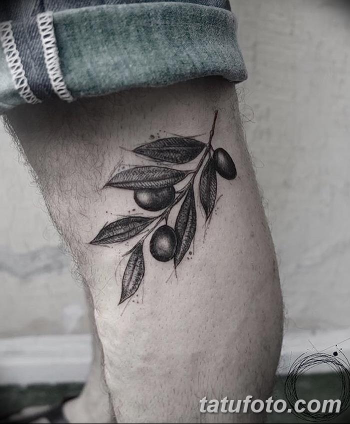 фото тату оливковая ветвь от 13.11.2017 №024 - olive branch tattoo - tatufoto.com