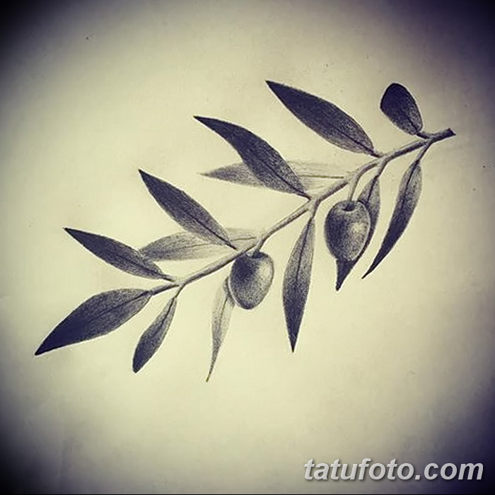 фото тату оливковая ветвь от 13.11.2017 №042 - olive branch tattoo - tatufoto.com