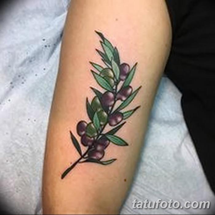 фото тату оливковая ветвь от 13.11.2017 №077 - olive branch tattoo - tatufoto.com