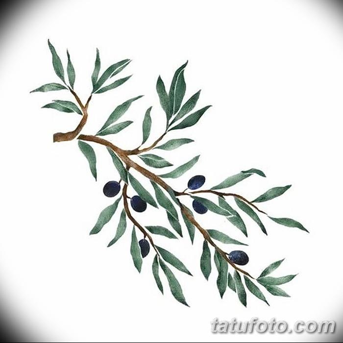 фото тату оливковая ветвь от 13.11.2017 №083 - olive branch tattoo - tatufoto.com