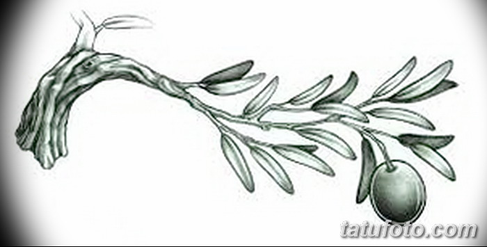 фото тату оливковая ветвь от 13.11.2017 №088 - olive branch tattoo - tatufoto.com