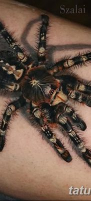 фото тату тарантул от 21.11.2017 №001 – tattoo tarantula – tatufoto.com