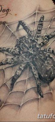 фото тату тарантул от 21.11.2017 №012 – tattoo tarantula – tatufoto.com